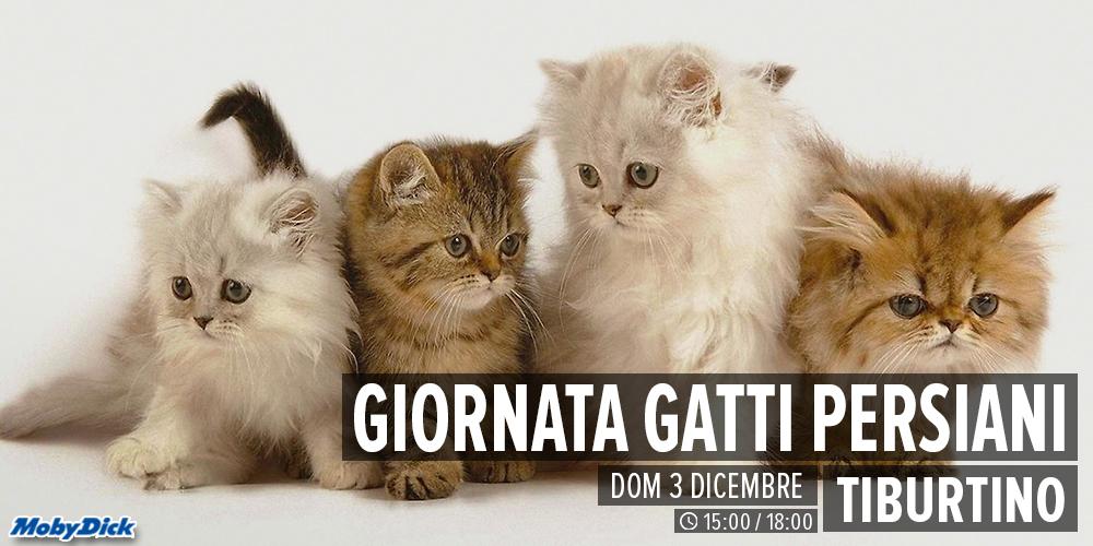 Gatto Persiano Day A Guidonia