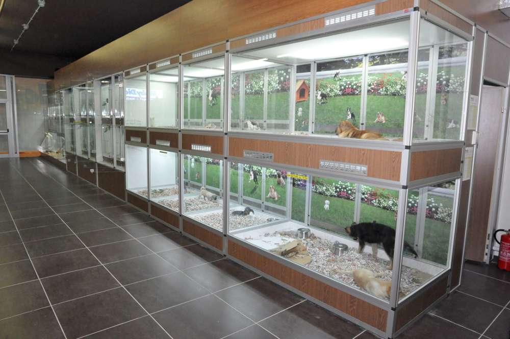 Negozio animali fiumicino vendita acquari fiumicino for Acquari usati in vendita