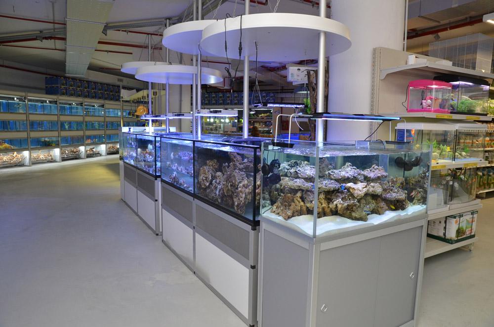 Negozio animali latina vendita acquari latina for Acquari usati in vendita